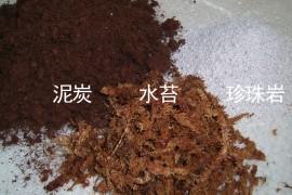如何种植食虫植物