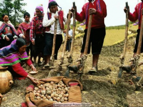 平平无奇的土豆,是如何改变世界的?