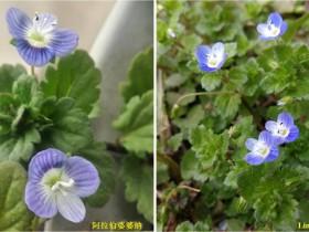 最常见的51种草本野花图片