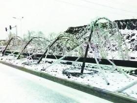 冷空气来袭,花木植物遭遇冰雪冻害怎么办?