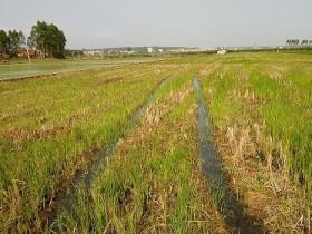 研究揭示我国稻田和旱地土壤有机碳固持途径