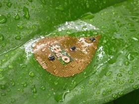 科学家研制植物可穿戴茎流传感器 发现西瓜更爱夜间生长