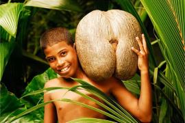 男根与肥臀:海椰子种子为什么长那么大?