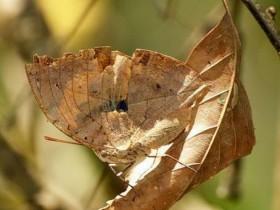 与昆虫为伴:被子植物的进化之路
