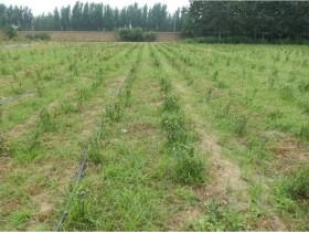 如何用最低的成本高效防治杂草