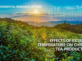 极端天气气温对中国茶叶生产影响