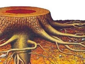 长在空气中的根——植物的气生根