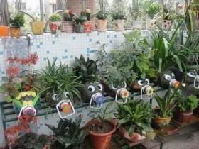 花盆种类、优缺点及选购