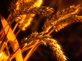 科学家发现禾本科植物间广泛存在的侧向基因转移
