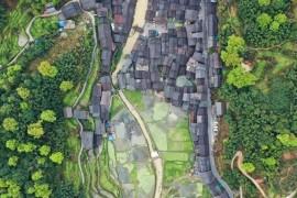 中国水稻地图