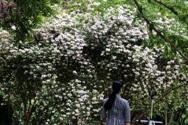 观花日记:忍冬科常见的几种观赏植物