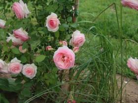 能够疗愈疾病的花园,应具备哪些特征?