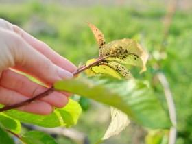 用魔法打败魔法,科学家以虫治虫防治虫害