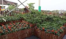 园艺盆栽蔬菜好看好养好吃好玩,市场前景广阔