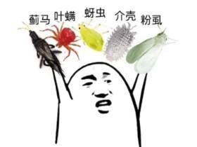 5种人畜无害的杀虫方法