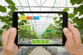 智慧灌溉和精准灌溉