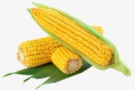 玉米的起源