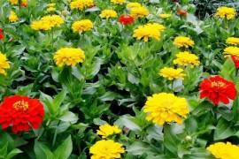 花卉分类:依花卉的用途分类