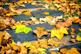 树木为什么会落叶呢?