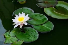 花卉分类:依花卉的栽培生境进行的分类