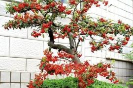 花卉分类:依花卉的观赏部位分类