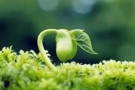 植物激素的发现