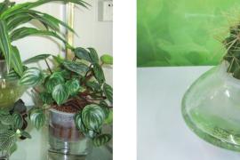 水培花卉植物的十大优点与好处