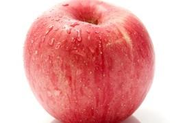 苹果的祖先在新疆