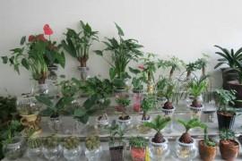 哪些植物花卉适合水培?